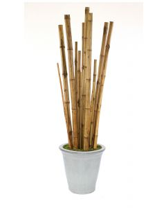 8' Bamboo Tree in White Stoneware Container