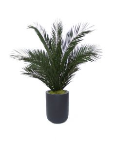 6' Phoenix Palm Tree in Round Black Dice Fiberstone Planter