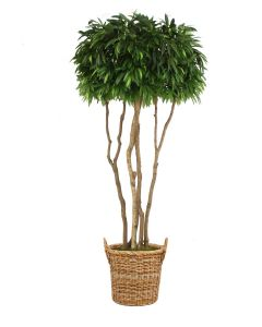 10' Mango Canopy Tree in Natural Round Core Arrorog Rattan Basket with Handles