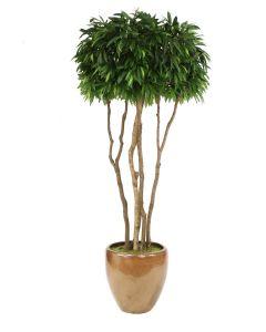 10' Mango Canopy Tree in Metallic Mocha Stoneware Planter
