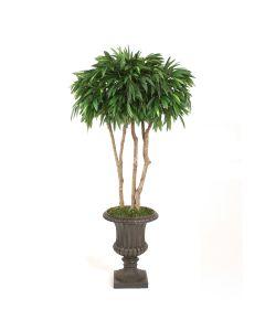 7' Canopy Mango Tree in Rust Fiberglas Classic Urn