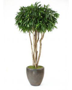 8' Canopy Mango Tree in Metallic Bronze Stoneware Pot