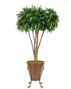 8' Mango in Golden Tortoise Tapered Planter in Acanthus Leaf Scrolled Stand