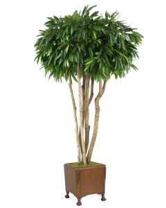 8' Canopy Mango Tree in Brown Leather Claw-Foot Planter