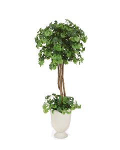 6' Ginko Tree with Ground Cover White Concrete Urn