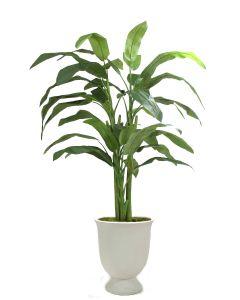8' Heliconia Tree in Black Fiberstone Planter