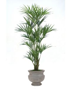 7.5' Deluxe Kentia Palm Tree in Anchracite Concrete-Lite Urn