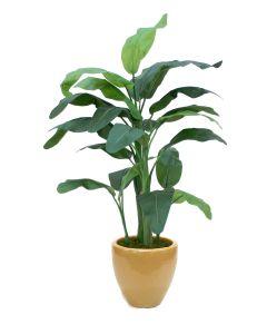 5' Banana Tree in Dark Sand Glazed Earthenware Planter
