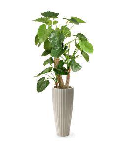7' Alocasia Taro Tree in Glazed White Earthenware Highland Floor Vase