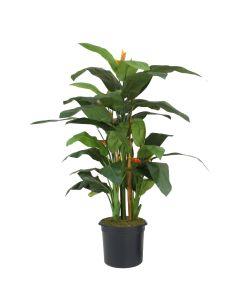 7' Heliconia Tree in Black Plastic Nursery Liner