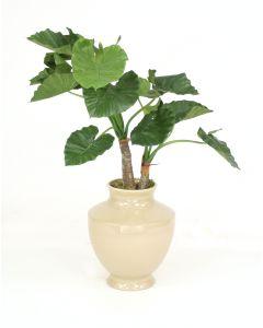 4.5' Alocasia Calidoro Plant in Shellish Sand Earthenware Vase