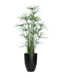 6' Papyrus with Grass and Bamboo in Black Fiberstone Planter