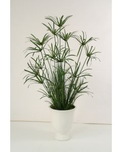 6' Papyrus With Grass and Bamboo in White Concrete Urn