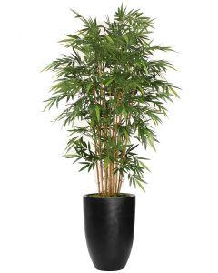 7' Natural Bamboo Tree in Black Fiberstone Planter