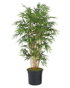 7' Natural Bamboo Tree in Black Plastic Nursery Liner