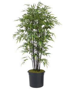 8' Black Bamboo Tree in Black Plastic Liner