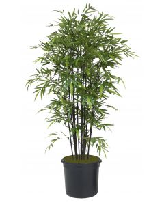 9' Black Bamboo Tree in Black Plastic Nursery Liner