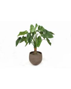 Alocasia Calidora Tree in Chocolate Orb Planter