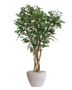 7' Canopy Ficus Tree in Textured Oval Concrete Lite Planter