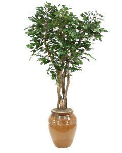 7' Canopy Ficus Tree in Extra Large Mocha Glazed Egg Pot