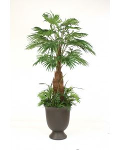 8' Fan Palm with Ground Cover in Black Bean Finish Concrete Container