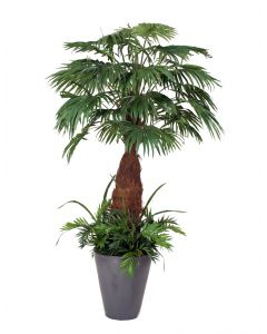 8' Fan Palm Tree with Ground Cover in Anthracite Black Glazed Stoneware Pot