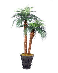 8.5' Phoenix Palm Tree X 3 In Black Cedarwood Fiberglas Garden Planter