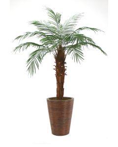 6' Phoenix Palm Tree in Tapered Rattan