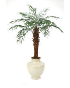 6' Phoenix Palm Tree in Shellish Sand Earthenware Planter