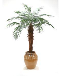 6' Phoenix Palm Tree in Dark Mocha Stoneware Egg Pot
