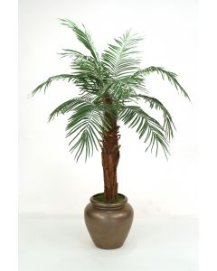 6' Phoenix Palm in Bronze Stone Water Jar