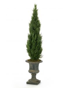 7' Cedar Tree in Classic Rust Urn