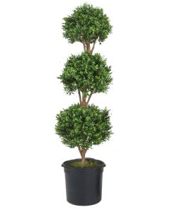 Boxwood 3 Ball Topiary in Liner