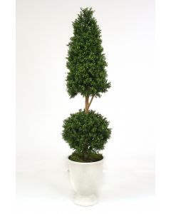 5' Boxwood Cone and Ball Topiary Tree in White Concrete Urn