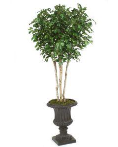 8' Ficus Tree in Rust Finish Resin Classic Urn