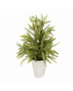 Fir Tree in White Pot