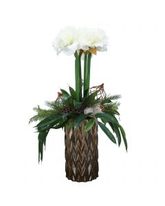 White Amaryllis in Bronze Planter with Pine