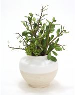 Succulents in Matte White and Aged Stone Vase