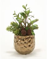 Jade, Succulents and Cactus in Burnt Gold Gabbi Planter
