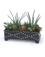 Succulent Garden in Black Leather Box