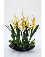 Gold Oncidium and Succulents in Black Oval Ceramic Planter