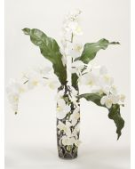 Cream White Orchid and Tacca Leaf with Honeycomb in Open Weave Vase