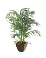 4' Areca Palm in Square Bronze Metal Contempo Planter