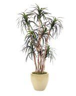 6.5' Dracaena Tree in Glazed Sand Stoneware Planter