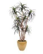 6.5' Dracaena Tree in Dark Sand Glazed Earthenware Planter