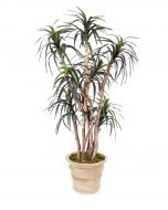 6.5' Dracaena Tree in Brown Clay Garden Planter