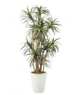 8' Dracaena Tree in Glazed White Stoneware Planter