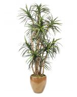 8' Dracaena Tree in Metallic Mocha Stoneware Planter