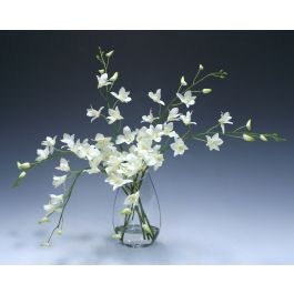Waterlook White Dendrobium Orchid In Angled Glass Vase Distinctive Designs