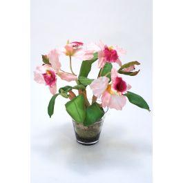Waterlook Sonia Cattleya Orchid Plant In Glass Flower Pot Vase Distinctive Designs